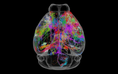 Xstrahl in Action: SARRP used in whole brain versus targeted dentate gyrus irradiation models