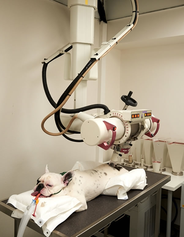 Expand Oncology in Your Veterinary Practice with Orthovoltage Radiation Therapy