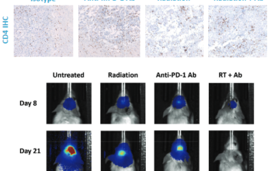 SARRP Enables Targeted Focal Irradiation
